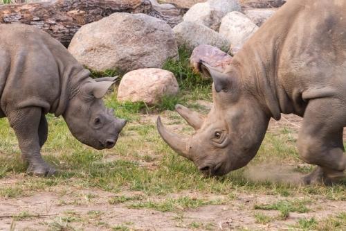 Rhino School