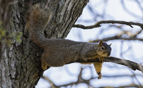 Squirrel Hangs Out